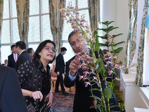 Menkeu Sri Mulyani melihat anggrek 'Iriana Jokowi'.