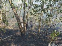 Kebakaran Hutan di Gunung Tambora Terus Terjadi