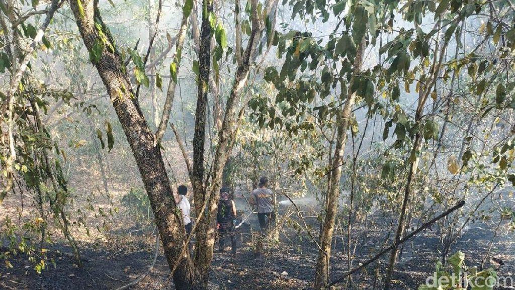 Ada Kebakaran Hutan, Jalur Pendakian Gunung Tambora Masih Aman