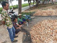 Menyulap Sampah Kulit Rajungan Jadi Bernilai Jual Tinggi di Karawang