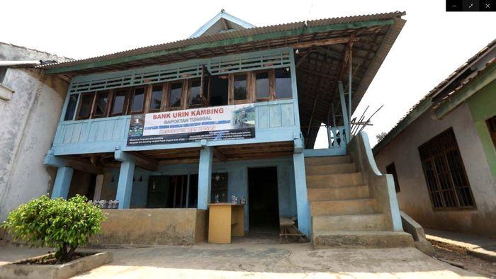 Gapoktan Tunggal di Kampung Negeri Sungkai, Kabupaten Way Kanan membuat bank urine kambing. Pool/Kemendes.