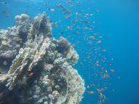 Terumbu karang nan indah (Twitter)