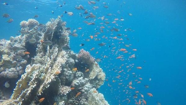 Saking jernih airnya, kamu bahkan juga bisa melihat keindahan biota laut dari permukaan tanpa perlu snorkeling atau menyelam (Twitter)
