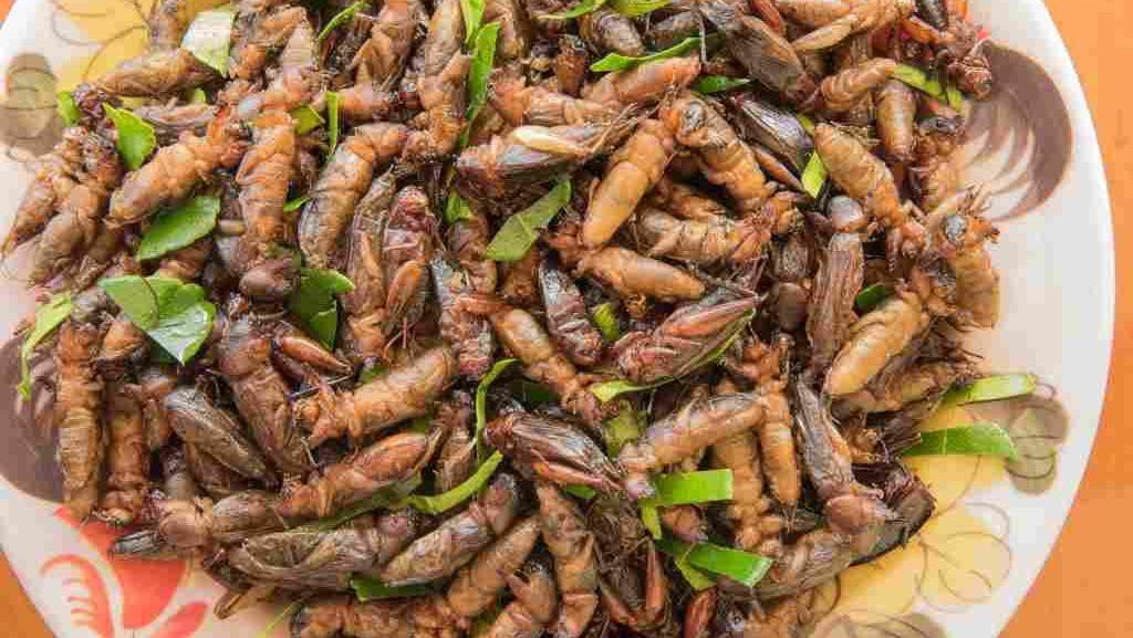Kriuk Renyah, 5 Serangga Jadi Camilan Ndeso yang Enak