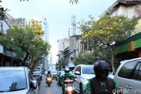 Di Jalan Braga, ada kurang lebih 50 pohon tabebuya yang jadi peneduh saat pengendara terjebak kemacetan (Reta Amaliyah Shafitri/detikcom)