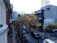 Tak heran, banyak yang sengaja datang ke Jalan Braga untuk sekadar berswafoto dengan latar belakang kecantikan pohon Tabebuya (Reta Amaliyah Shafitri/detikcom)