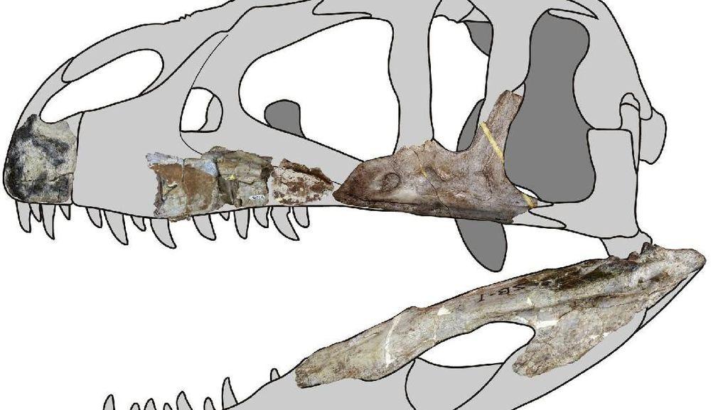 Fosil Dinosaurus Bergigi Hiu Ditemukan di Thailand