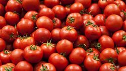 Cara Menanam Tomat di Pot, Simpel dan Praktis!
