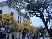 Mekarnya bunga Tabebuya membuat sepanjang Jalan Braga terasa seperti negeri matahari terbit, Jepang (Reta Amaliyah Shafitri/detikcom)
