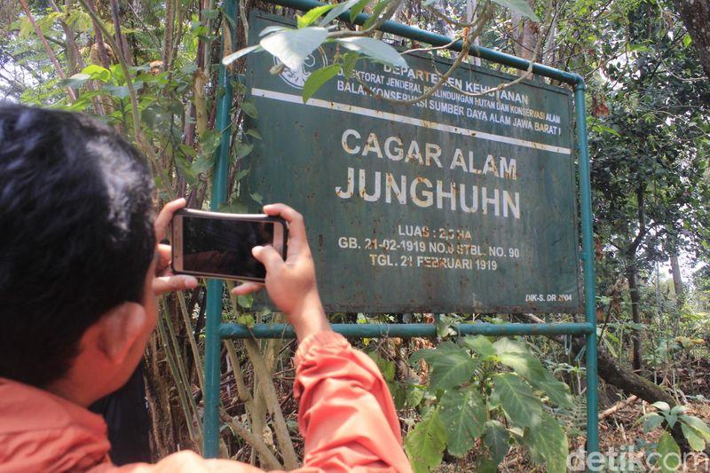 Pada abad ke-19 Jawa pernah menjadi penghasil kina terbesar di dunia. Ketika itu hampir 90 persen kebutuhan kima berasal dari Indonesia. Pohon kina dijadikan obat malaria dan bahan dasar obat. (Yudha Maulana/detikcom)