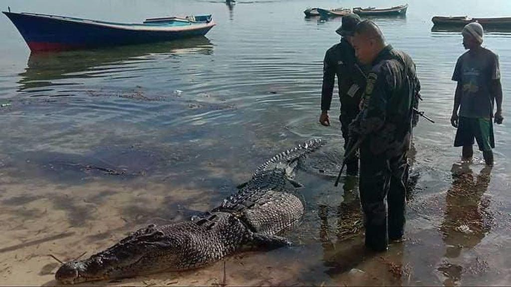 Panjangnya Nyaris 5 Meter, Buaya Air Asin Raksasa Tewaskan Nelayan