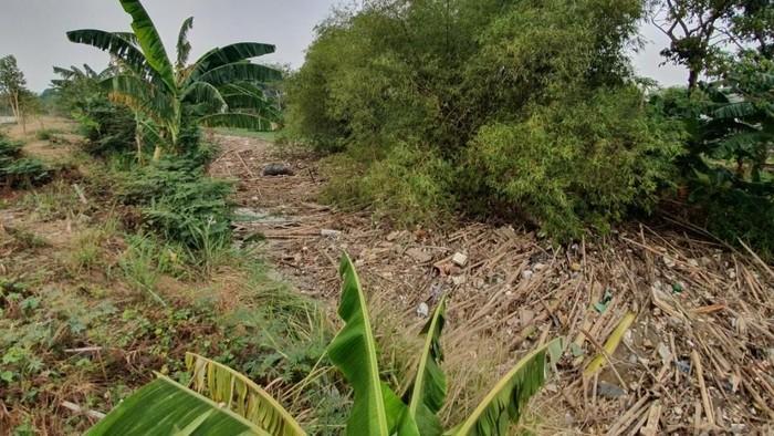 Foto: Sampah bambu di Sungai Cikeas, Bekasi (Isal Mawardi/detikcom)