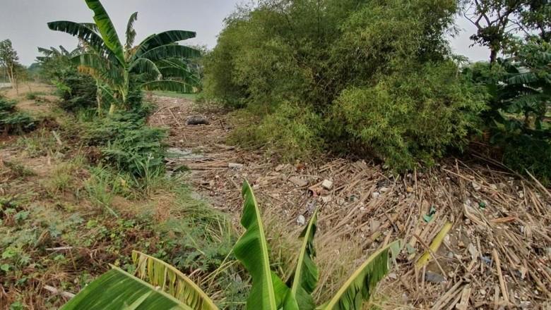 Dinas LH Bekasi: Sampah Bambu di Sungai Cikeas Kiriman dari Bogor dan Depok