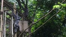 Peduli Owa Jawa, Yuk Ikutan Camping di Gunung Puntang