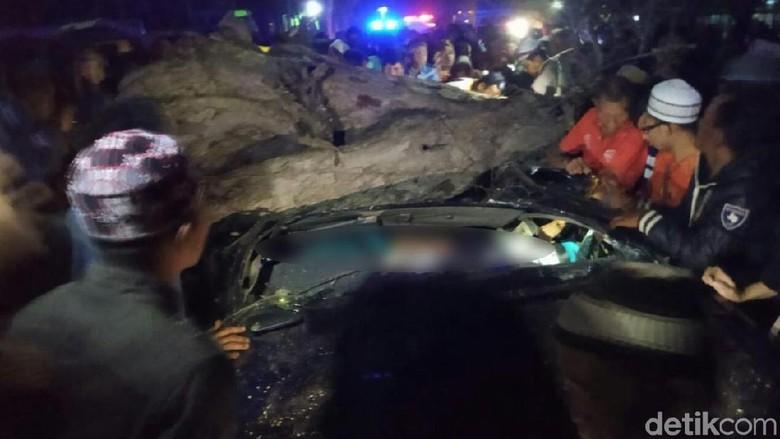 Pohon Asam Tumbang Timpa Mobil di Situbondo, 3 Orang Tewas