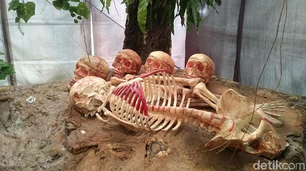 Walau jenazahnya hanya diletakkan tanpa dikubur, nyatanya jenazah di sana tak berbau. Kehadiran pohon taru menyan di area pemakaman dipercaya masyarakat menetralkan bau tak sedap dari proses pembusukan (Randy/detikcom)