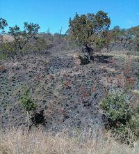 Sedih, 150 Hektar Hutan di Gunung Rinjani Terbakar
