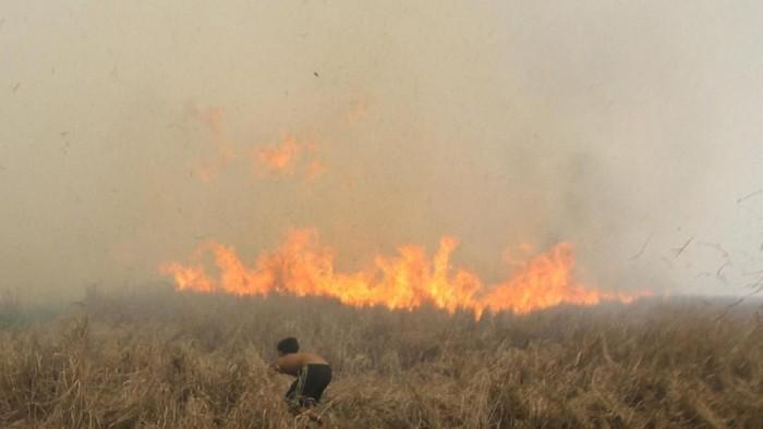 Upaya pemadaman karhutla di kawasan Sumatera dan Kalimantan terus dilakukan. Warga turut berjibaku memadamkan api agar tak makin meluas hingga permukiman.