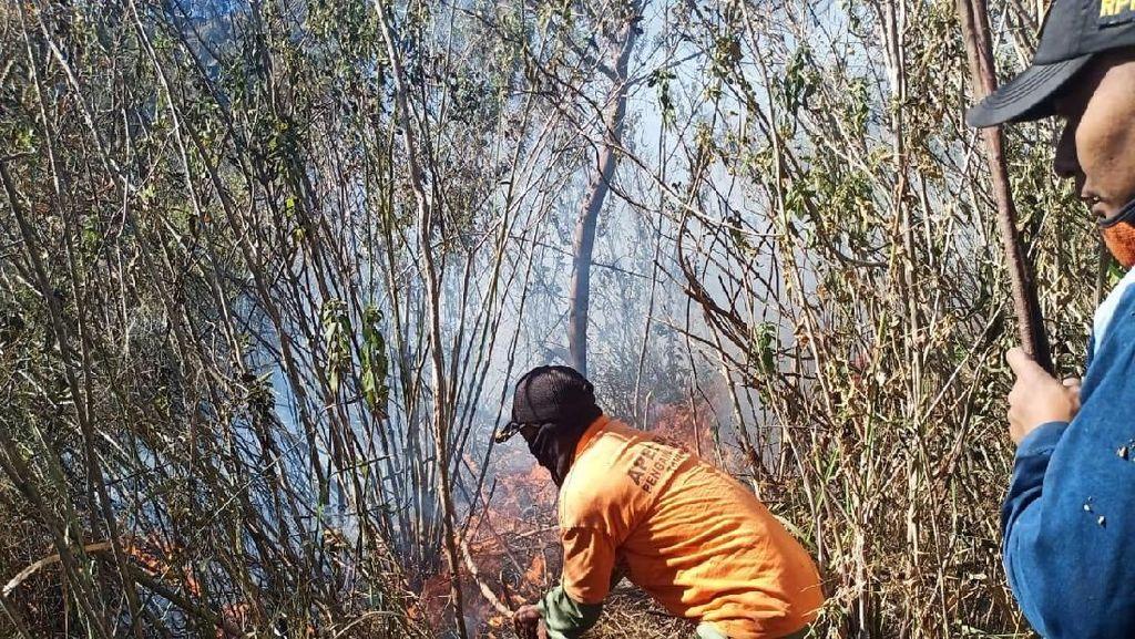725 Hektare Hutan di Mojokerto Terbakar Sepanjang Musim Kemarau