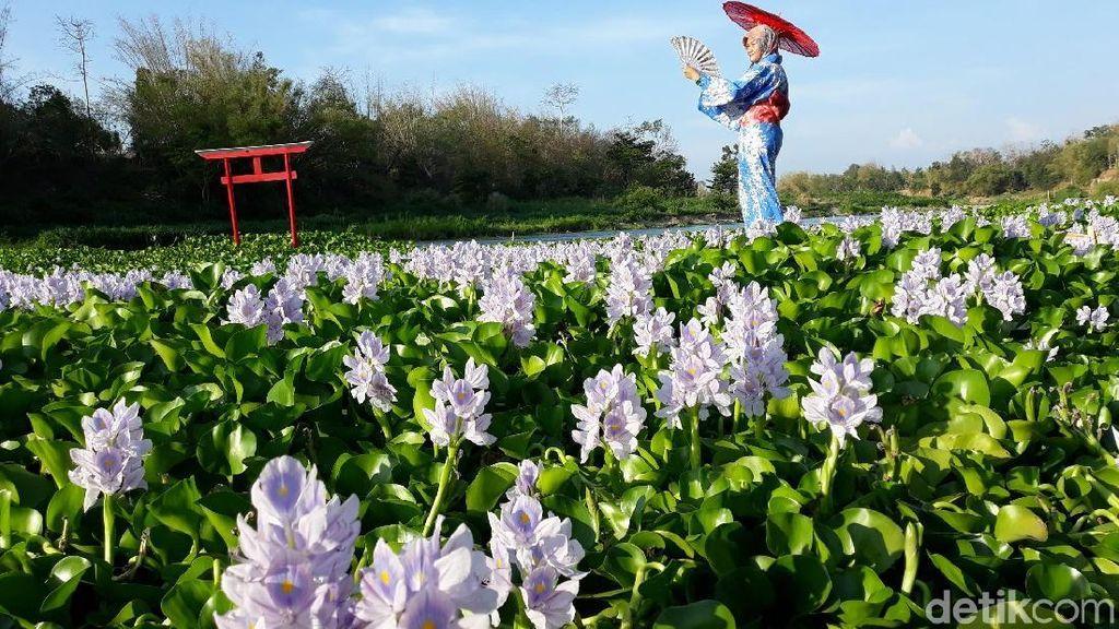 Foto: Seperti di Jepang, Padahal di Bantul