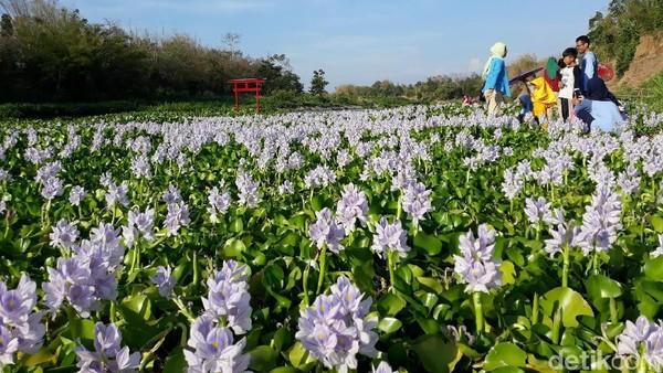 Tema ala-ala Jepang diusung karena di Bantul belum ada destinasi wisata yang bertemakan itu. Wajar kalau jadi ramai dikunjungi wisatawan. (Pradito/detikcom)