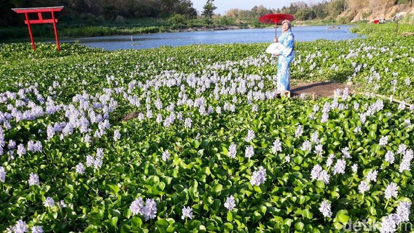 Traveler pun bisa bergaya maksimal seperti sedang liburan ke Jepang. Padahal, sedang berada di Bantul. (Pradito/detikcom)