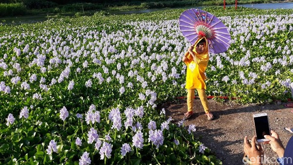 Untuk berfoto pakai properti, traveler akan dikenai biaya sewa. Untuk payung dan kipas Jepang biaya sewanya sukarela, tapi kalau yang baju ala Jepang harga sewanya Rp 25 ribu. (Pradito/detikcom)