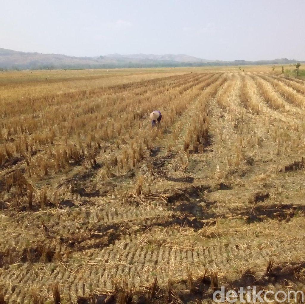 Pengaliran Air Irigasi Waduk Kedungombo Dibuka 1 November