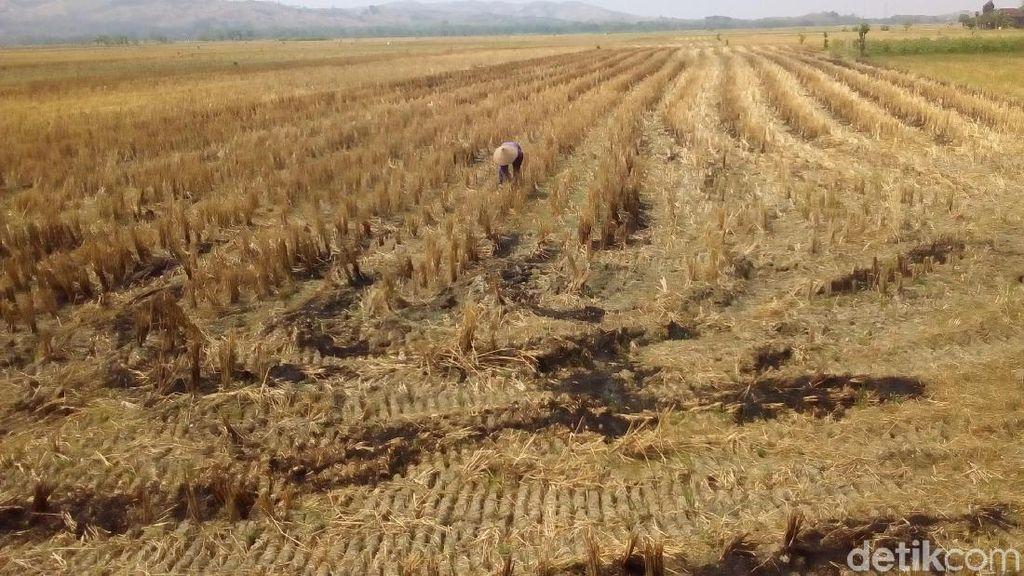 Mengoptimalkan Pertanian Lahan Kering