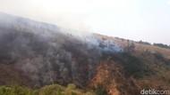 Cemara dan Akasia Ludes, Kebakaran di Gunung Ringgit Pasuruan Padam