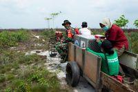Orang Utan Mama Sifa dan Anaknya Diselamatkan dari Karhutla di Kalbar