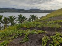Misteri Kapak Berusia 2.500 Tahun di Papua