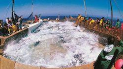 Pulau Kecil di Italia Ini Jadi Pemasok Bluefin Tuna untuk Jepang