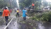 Kecelakaan Saat Hindari Pohon Tumbang di Bogor, Pemotor Tewas