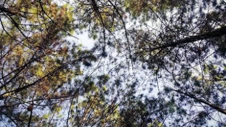 Lindungi Hutan
