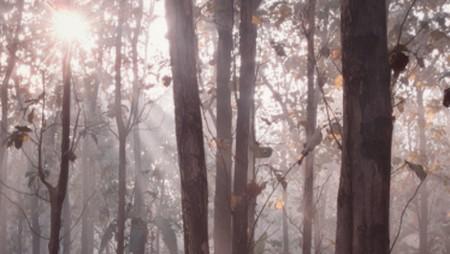sinar pagi di hutan jati