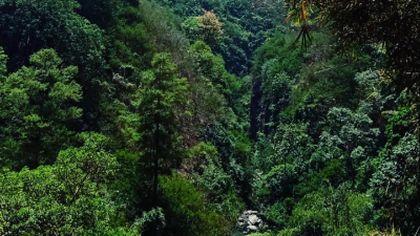 Lestarikan dan Hijaukan Hutan Raya
