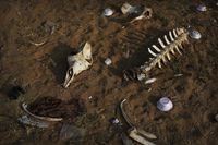 Manusia Purba Terbukti Gunakan Tulang Hewan untuk Simpan Sisa Makanan
