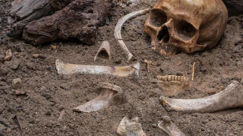 8 Jenis Manusia Purba yang Ditemukan di Indonesia/Foto: Istimewa