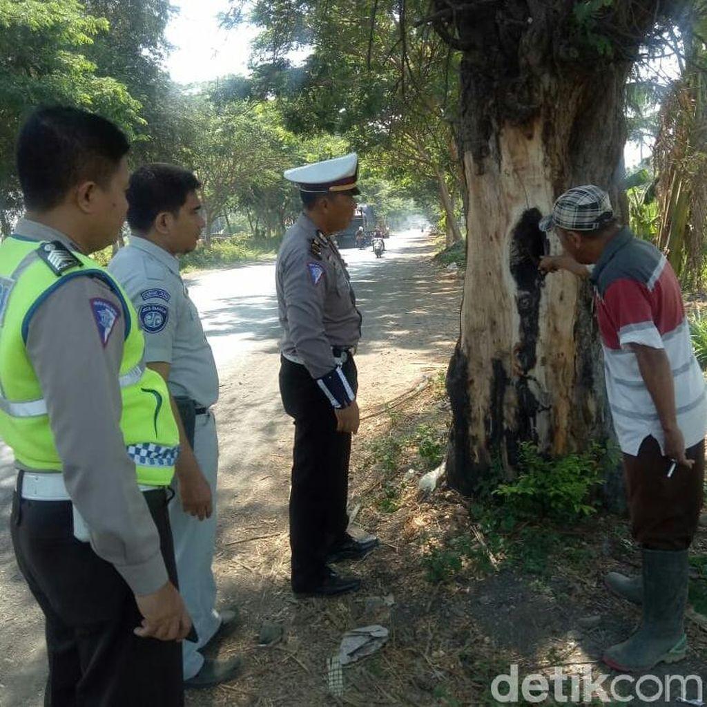 Polisi Temukan Banyak Pohon Keropos di Tepi Jalur Pantura Situbondo