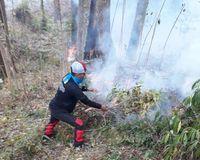 Hutan di Gunung Tambora Terbakar Lagi