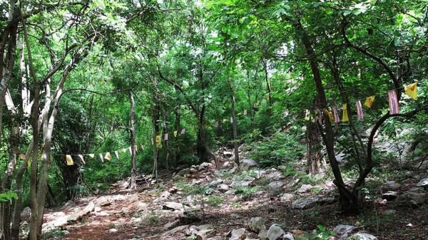 Ini adalah jalan setapak ke atas bukit Khao Kala. Bendera kuning-merah Buddha menggantung di sepanjang bendera merah putih biru Thailand. (CNN Travel)