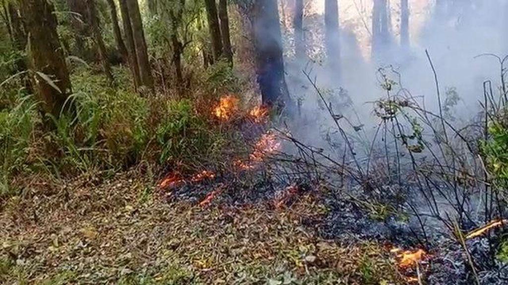Sejak Agustus, Sudah 80 Hektar Hutan Gunung Tambora Terbakar
