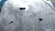 Heli yang Bawa Teknisi Tower BTS Ditembak di Papua