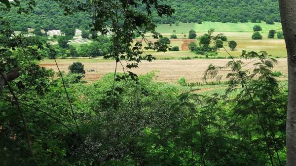 Pemandangan dari puncak bukit Khao termasuk ladang tebu. Di sini, Wassana Chuensamnaun, ketua pembela makhluk ruang angkasa mengaku melihat UFO mendarat. (CNN Travel)