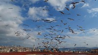 Ali Akbakri, remaja 17 tahun asal Suriah mengambil lanskap pantai Istanbul yang melambangkan kebebasan. Istimewa/UNICEF/Albakri.