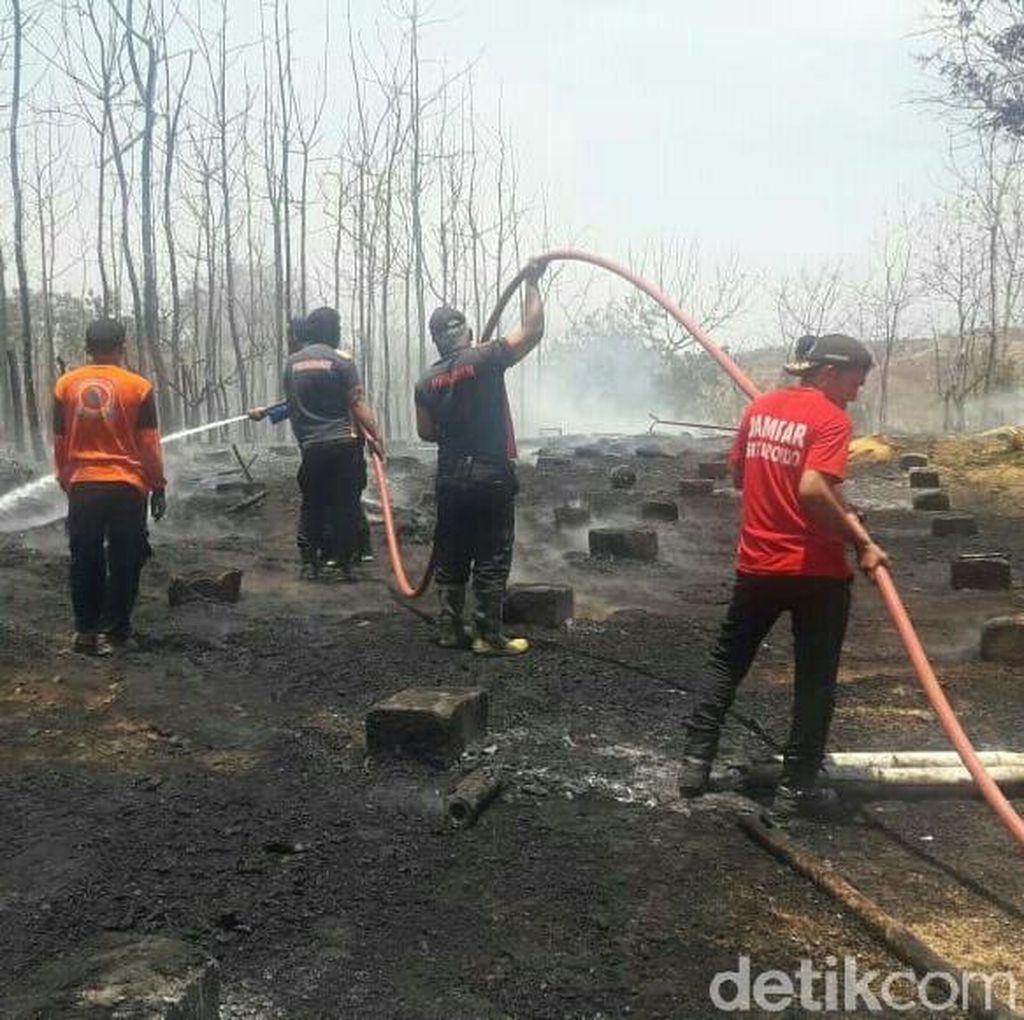 Peternakan di Situbondo Terbakar, 5.000 Ayam Hangus Terpanggang