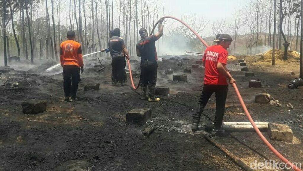 Peternakan di Situbondo Terbakar, 5.000 Ayam Mati Terpanggang