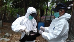 Virus Corona Menular Sangat Cepat, Dokter Paru Bandingkan dengan Flu Burung