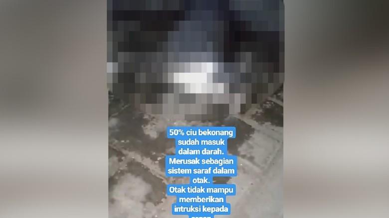 2 Rekan Pengunggah Video Kucing Dicekoki Ciu Dimintai Keterangan Polisi